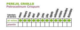 C PEREJIL CRIOLLO 1 - Plantas Faitful
