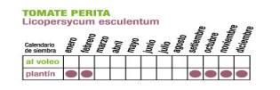 C TOMATE PERITA - Plantas Faitful