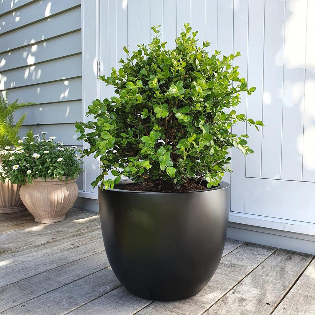 Plantas Faitful Decoful Muebles Exterior - Plantas Faitful