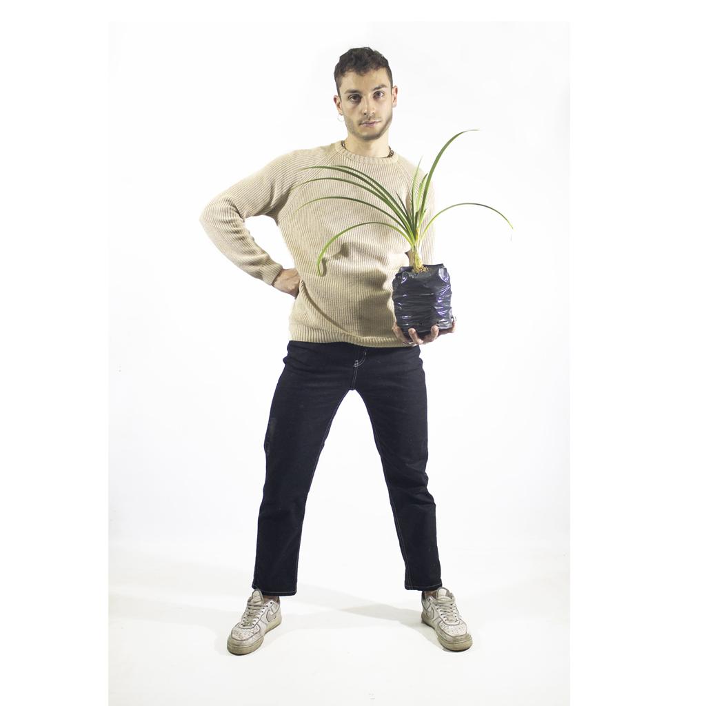 Plantas Faitful Plantas Exterior Agapanthus E3 Dimension 1 - Plantas Faitful