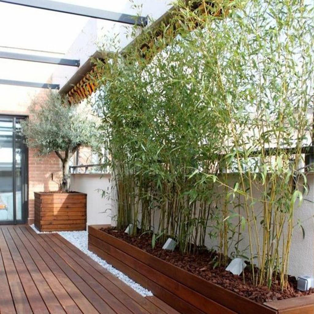 Plantas Faitful Plantas Exterior Cana de bambu - Plantas Faitful