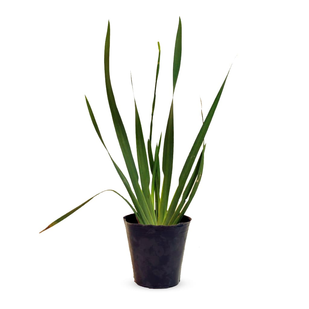 Plantas Faitful Plantas Exterior Diete Bicolor M12 1 - Plantas Faitful