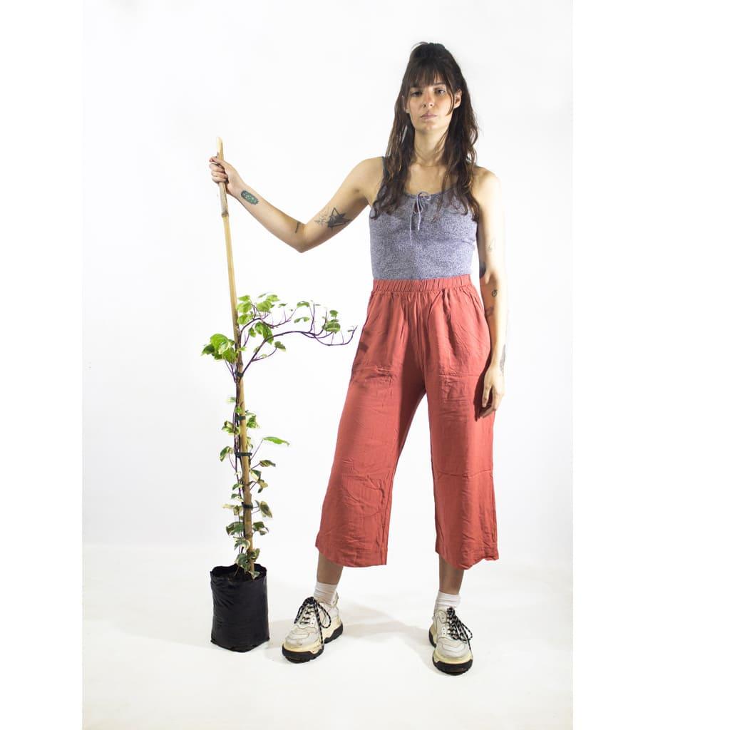 Plantas Faitful Plantas Exterior Hiedra Variegada E3 Dimension 1 - Plantas Faitful