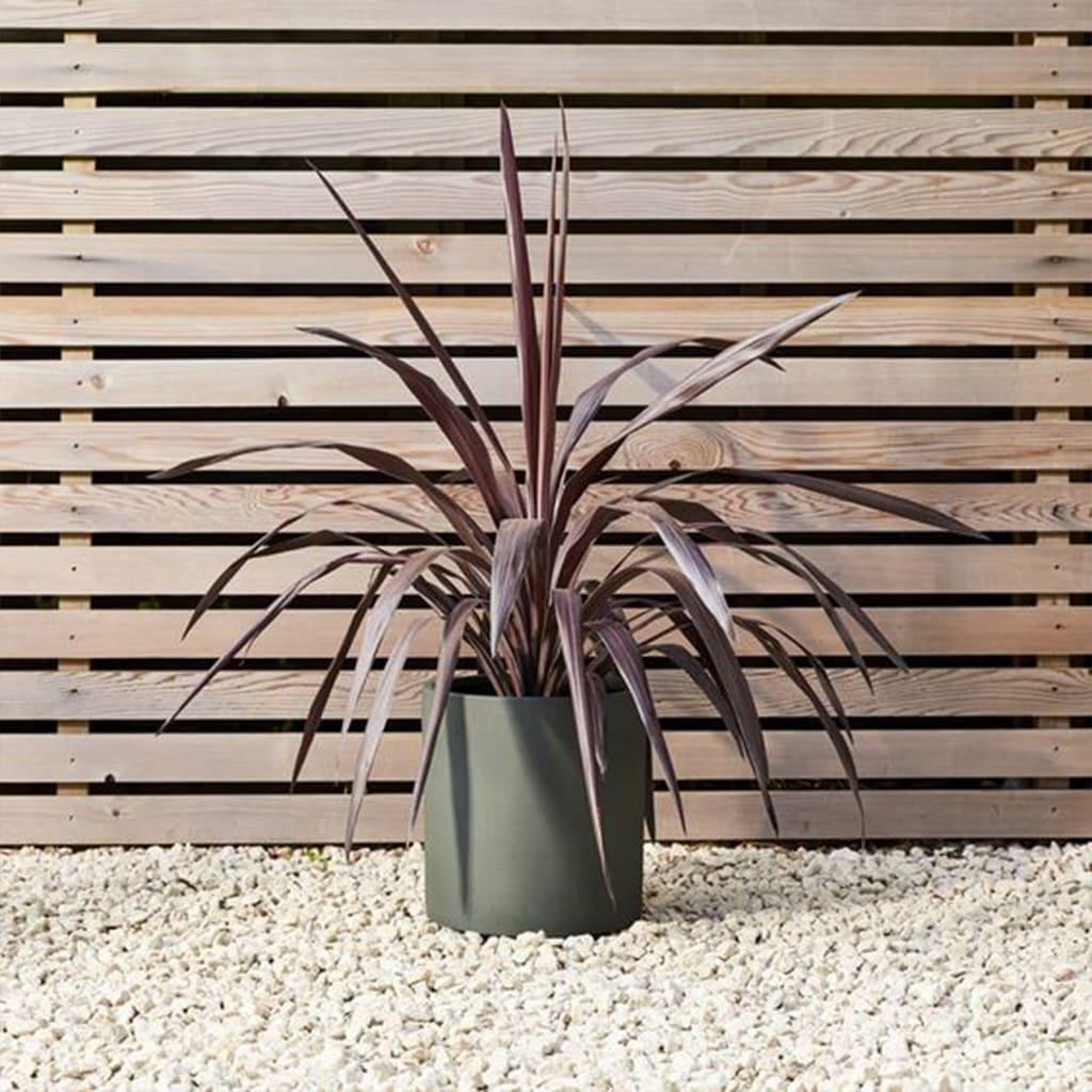 Plantas Faitful Plantas Exterior Indivisa Rubra E10 1 - Plantas Faitful