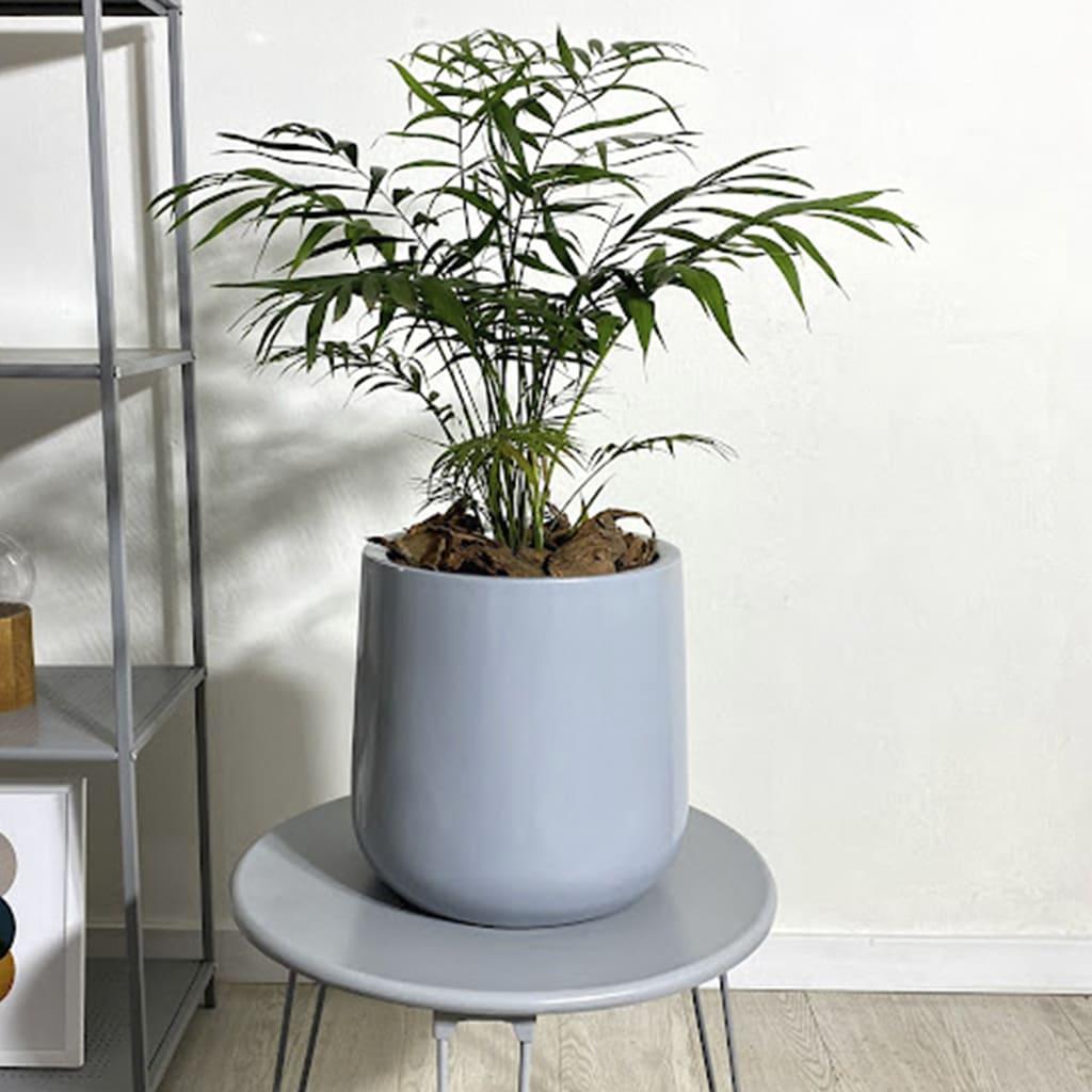Plantas Faitful Plantas Interior Chamaedorea E5 1 - Plantas Faitful