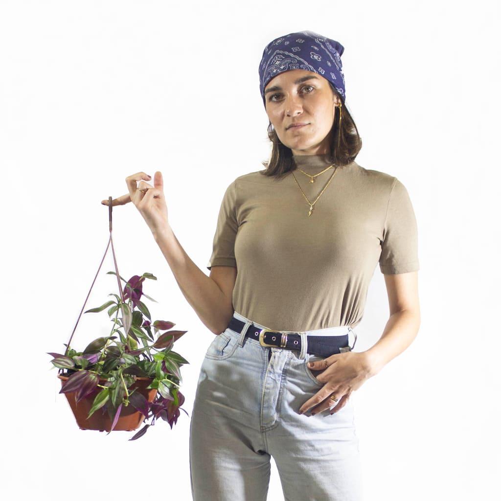 Plantas Faitful Plantas Interior Tradescantia Morada B18 Dimension 1 - Plantas Faitful