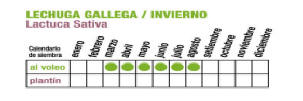 C LECHUGA GALLEGA 1 - Plantas Faitful