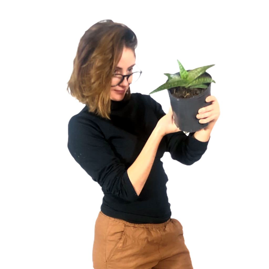 Plantas Faitful Plantas Exterior Aloe Vera M13 2 - Plantas Faitful