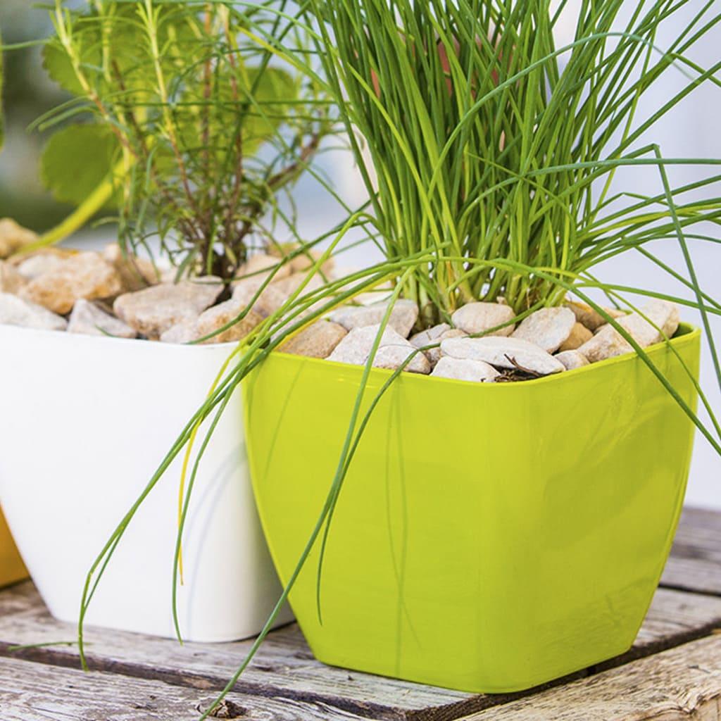 Plantas Faitful Macetas Plasticas TA Premium Cuadrada 1 - Plantas Faitful