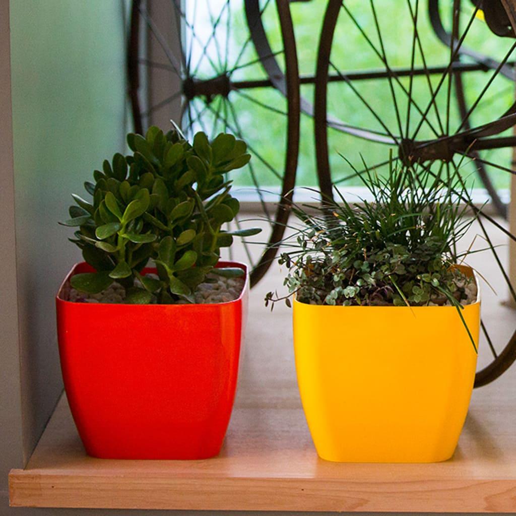 Plantas Faitful Macetas Plasticas TA Premium Cuadrada 2 - Plantas Faitful