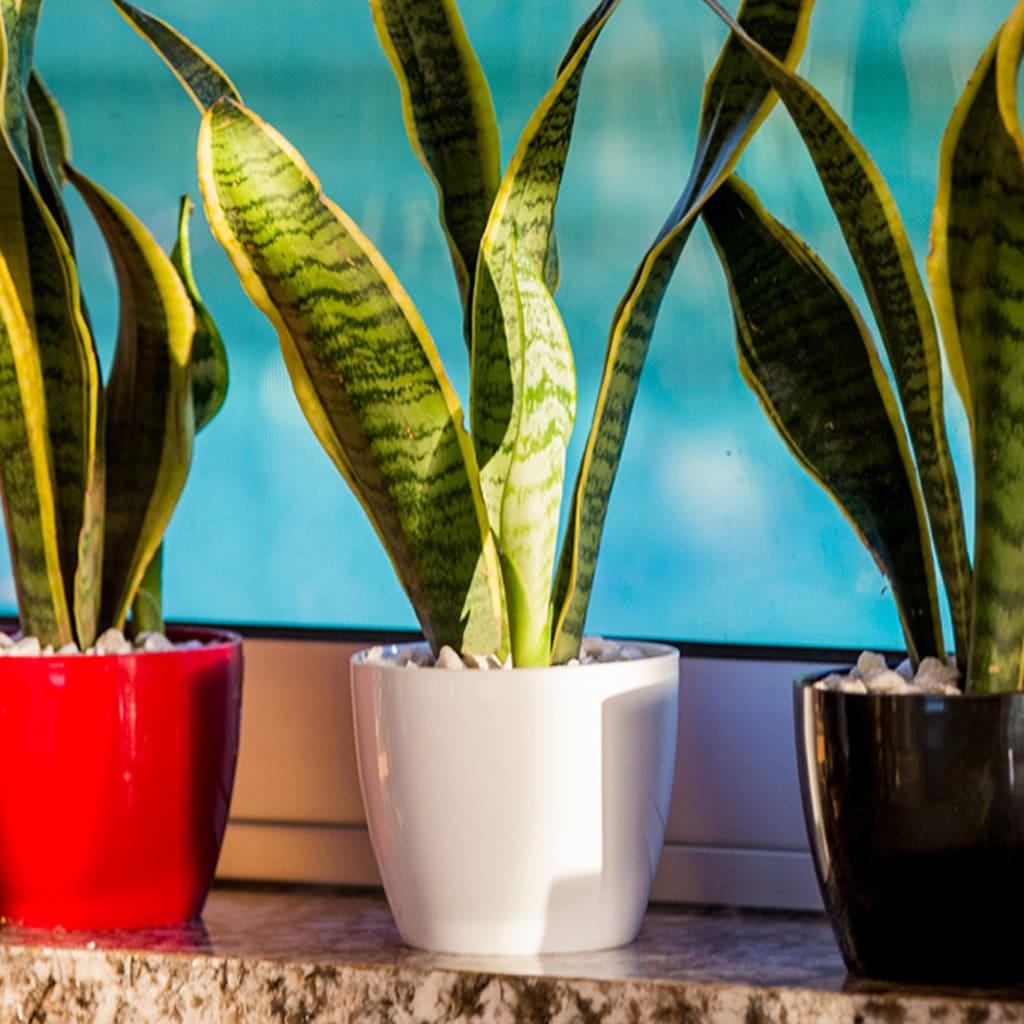 Plantas Faitful Macetas Plasticas TA Premium Redonda 1 - Plantas Faitful