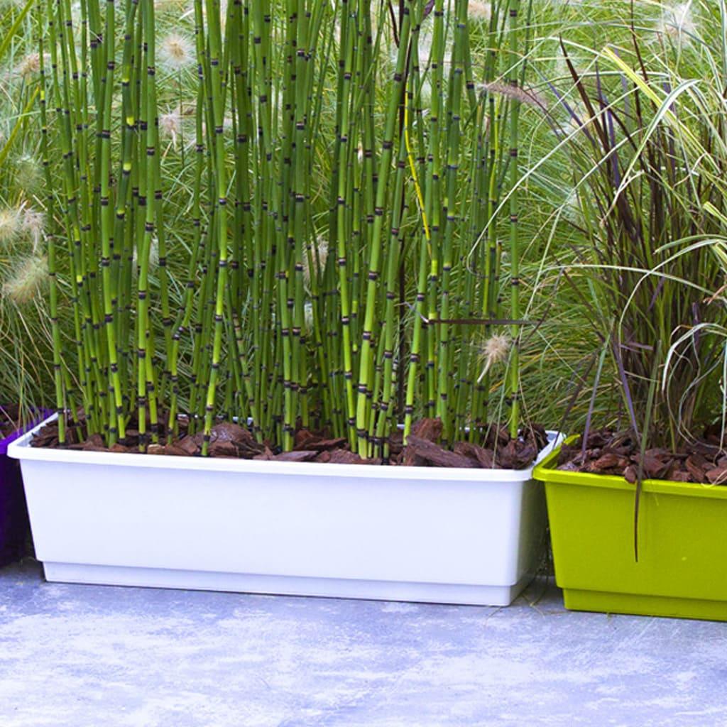 Plantas Faitful Macetas Plasticas TA Rocio 2 - Plantas Faitful