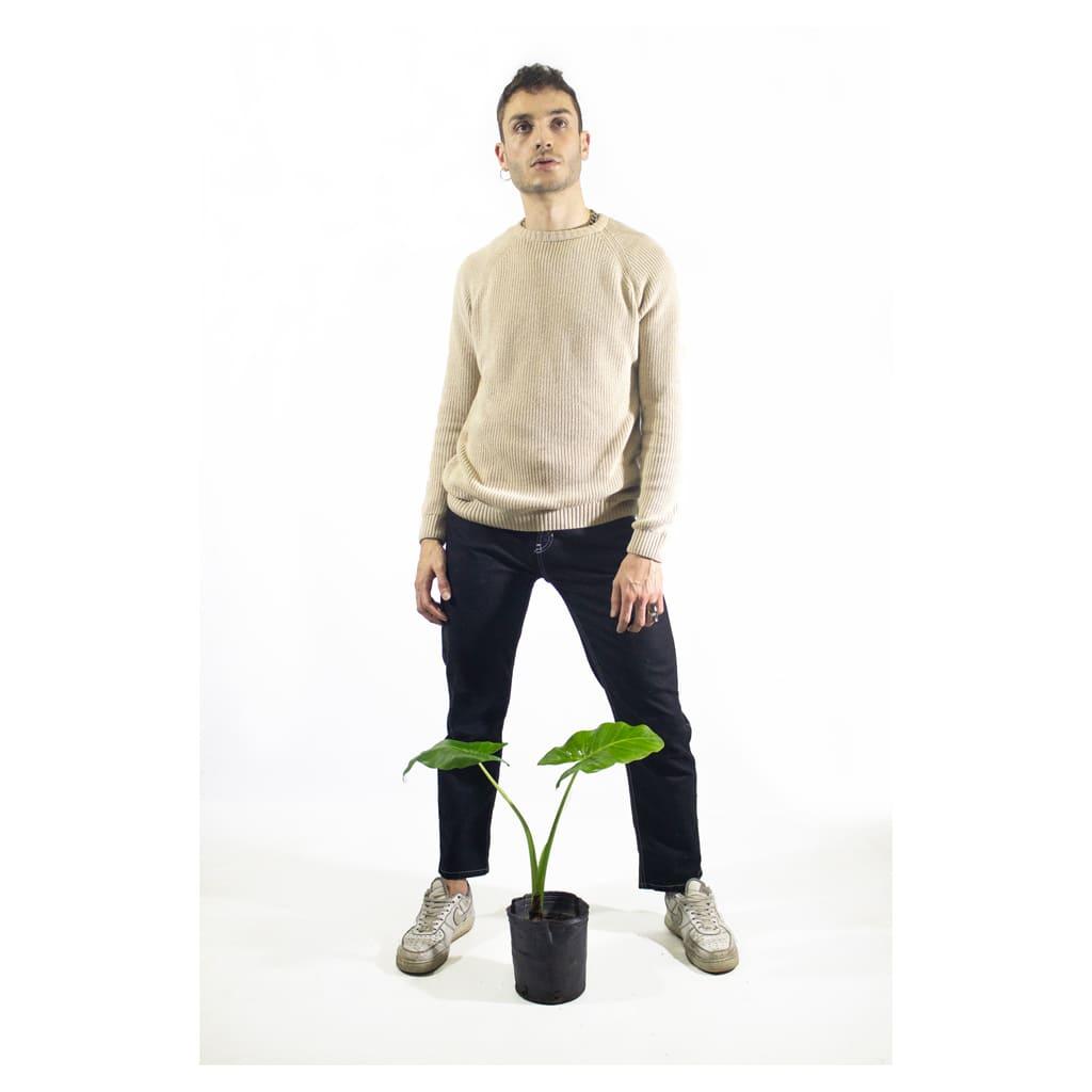 Plantas Faitful Plantas Exterior Alocasia E3 Dimension 1 - Plantas Faitful