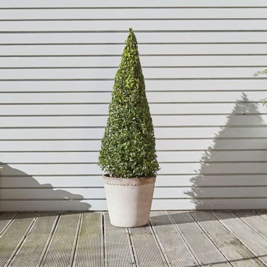 Plantas Faitful Plantas Exterior Eugenia Piramidal E10 1 - Plantas Faitful