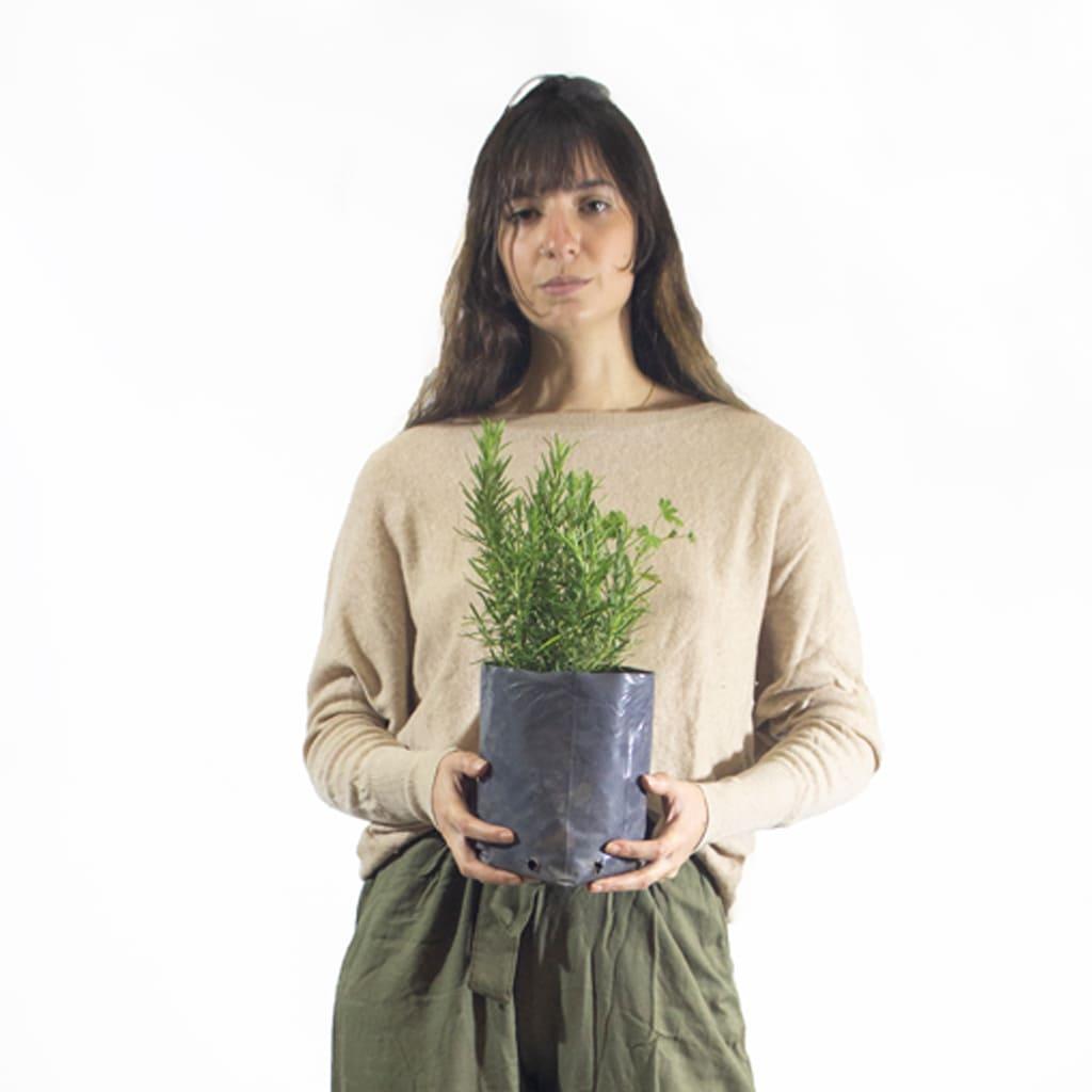 Plantas Faitful Plantas Exterior Romero E3 Dimension 1 - Plantas Faitful