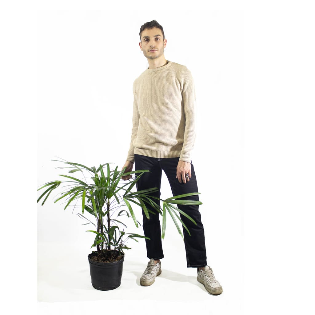 Plantas Faitful Plantas Interior Raphis E4 Dimension 2 - Plantas Faitful