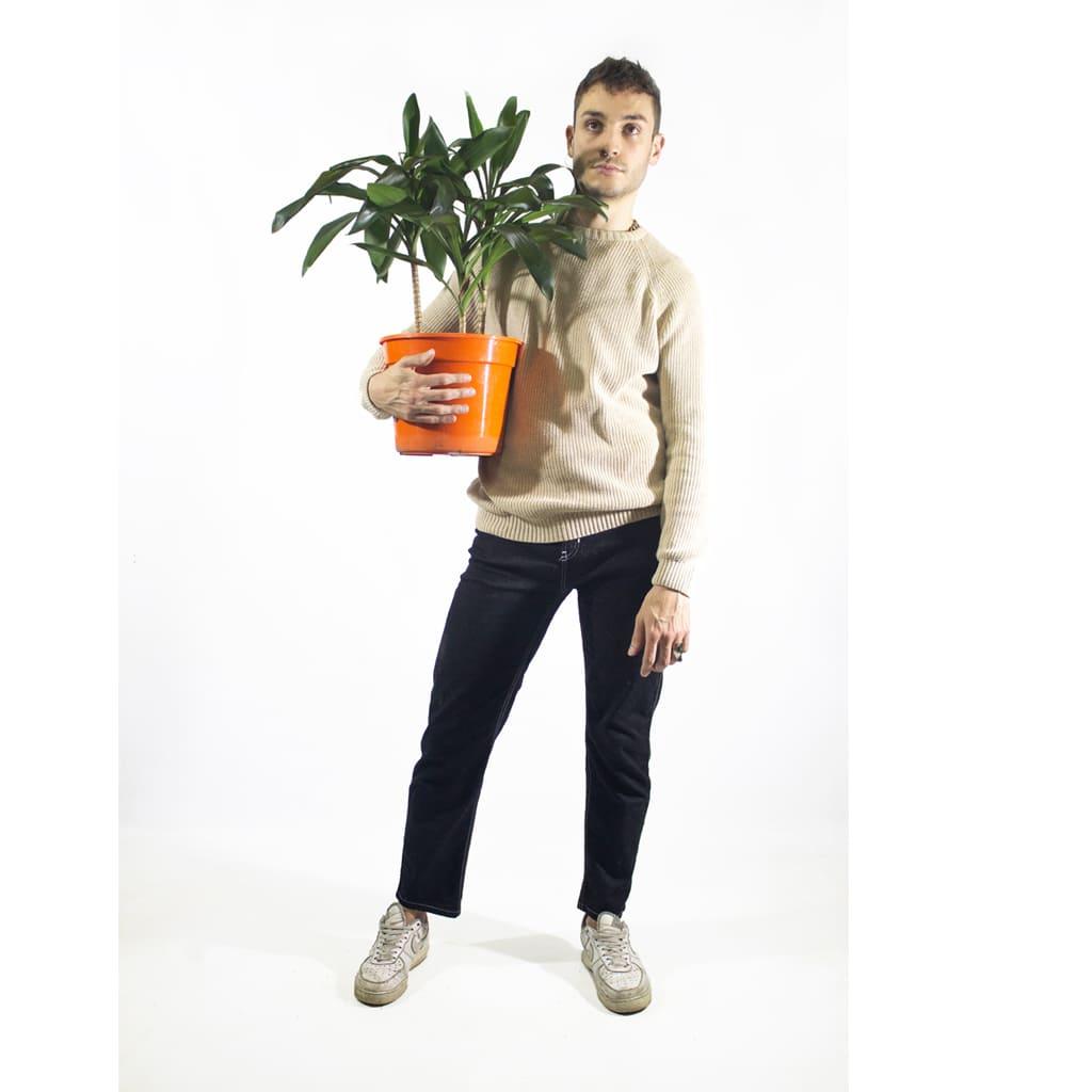 Plantas Faitful Plantas Interior Robusta E3 Dimension 2 - Plantas Faitful