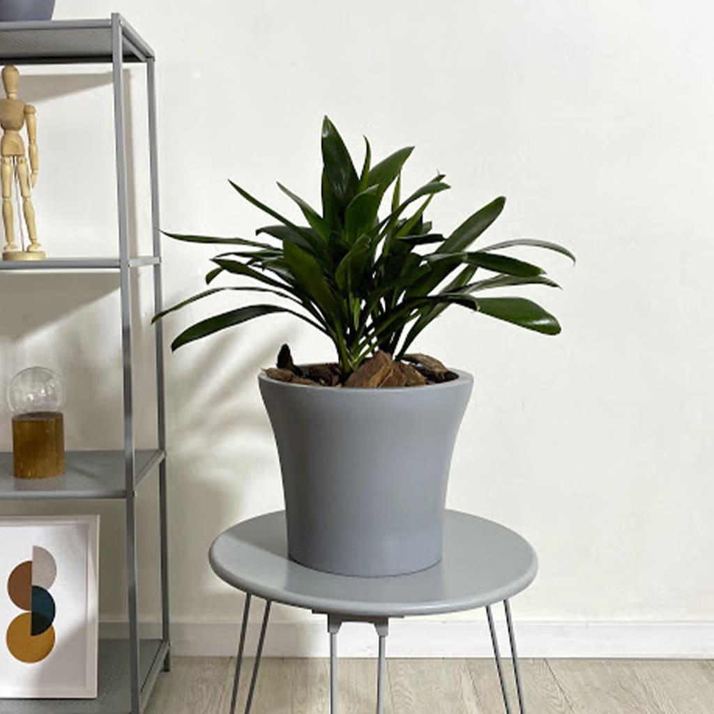 Plantas Faitful Plantas Interior Robusta E5 - Plantas Faitful