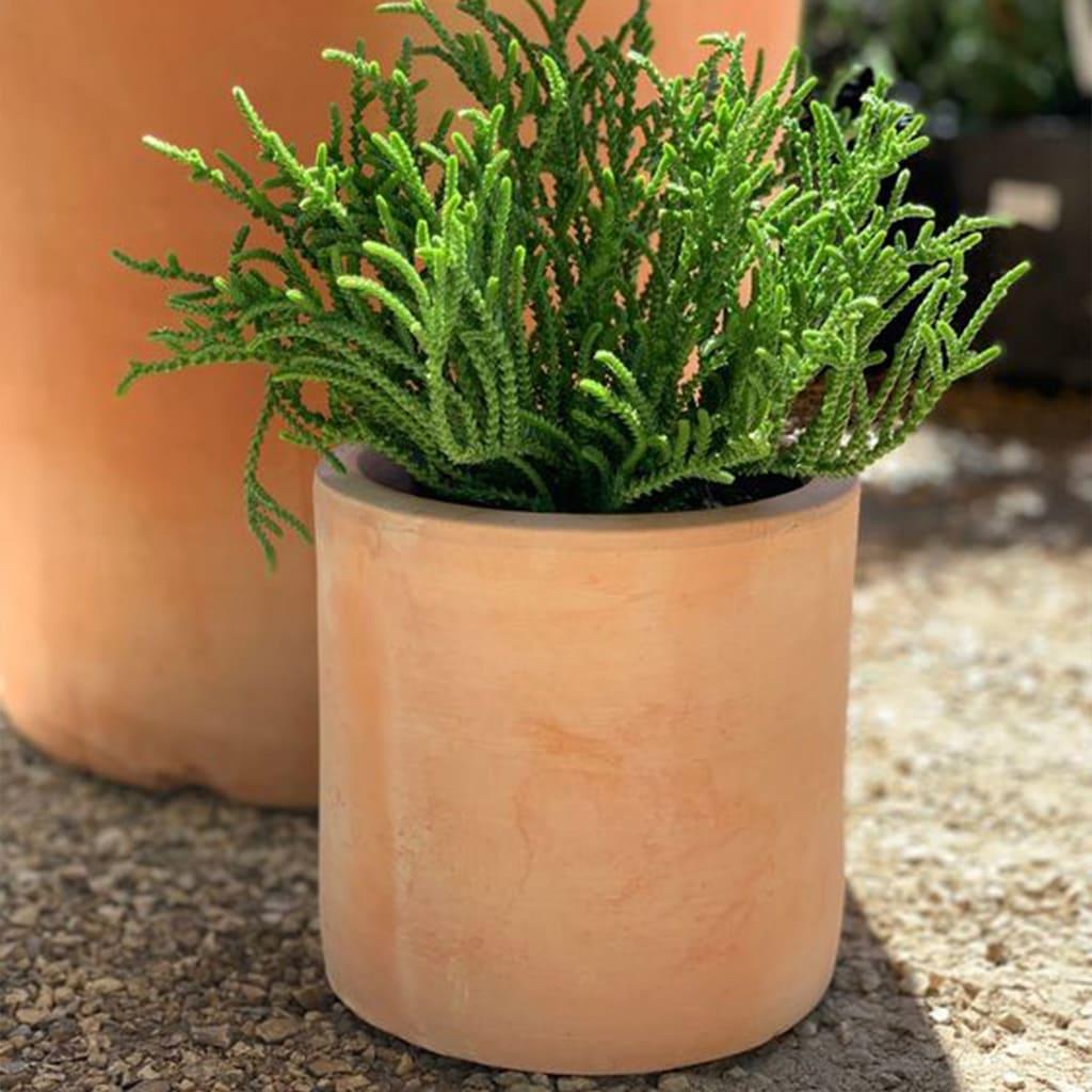 Plantas Faitful Macetas Barro Mendocino Cilindro 1 - Plantas Faitful