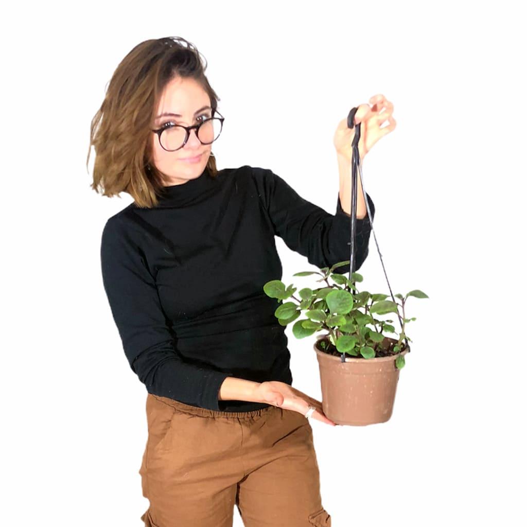 Plantas Faitful Plantas Exterior Dolar B18 - Plantas Faitful
