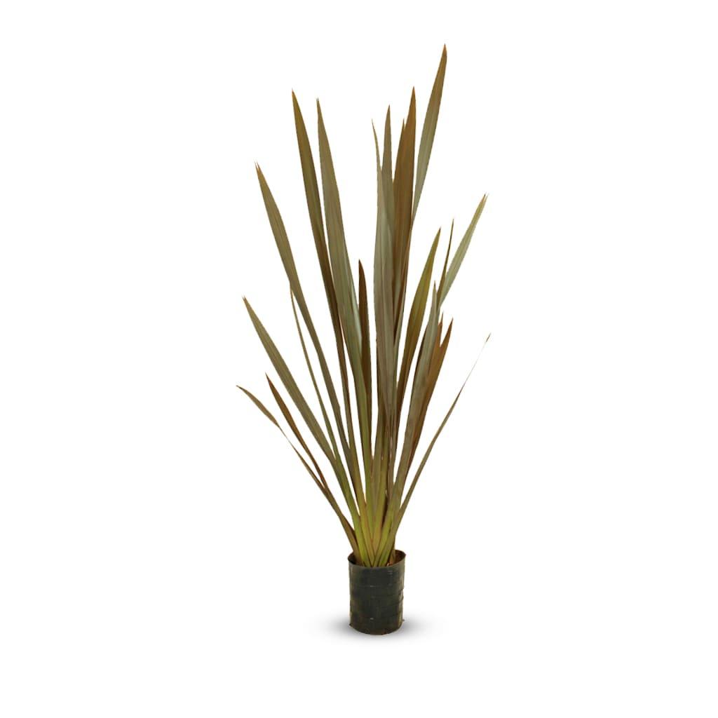 Plantas Faitful Plantas Exterior Formio Rubra E7 - Plantas Faitful