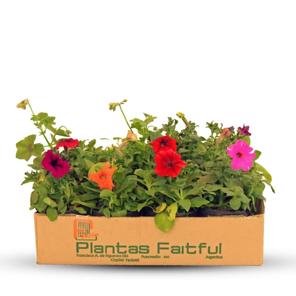 Plantas Faitful Plantas Exterior Petunia - Plantas Faitful