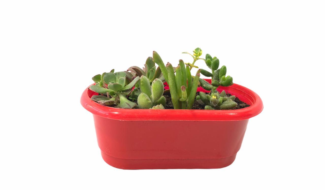 Suculentas variadas en jardinera