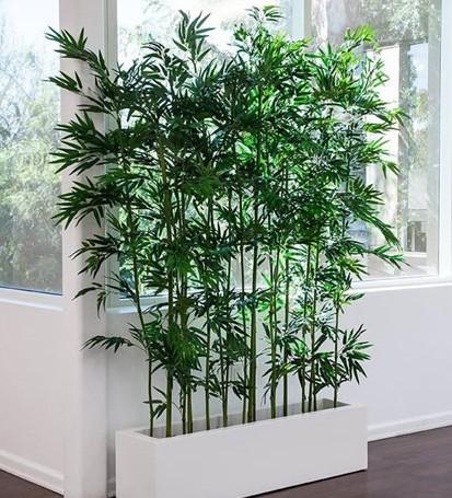 image3 - Plantas Faitful