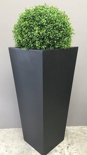 image9 - Plantas Faitful