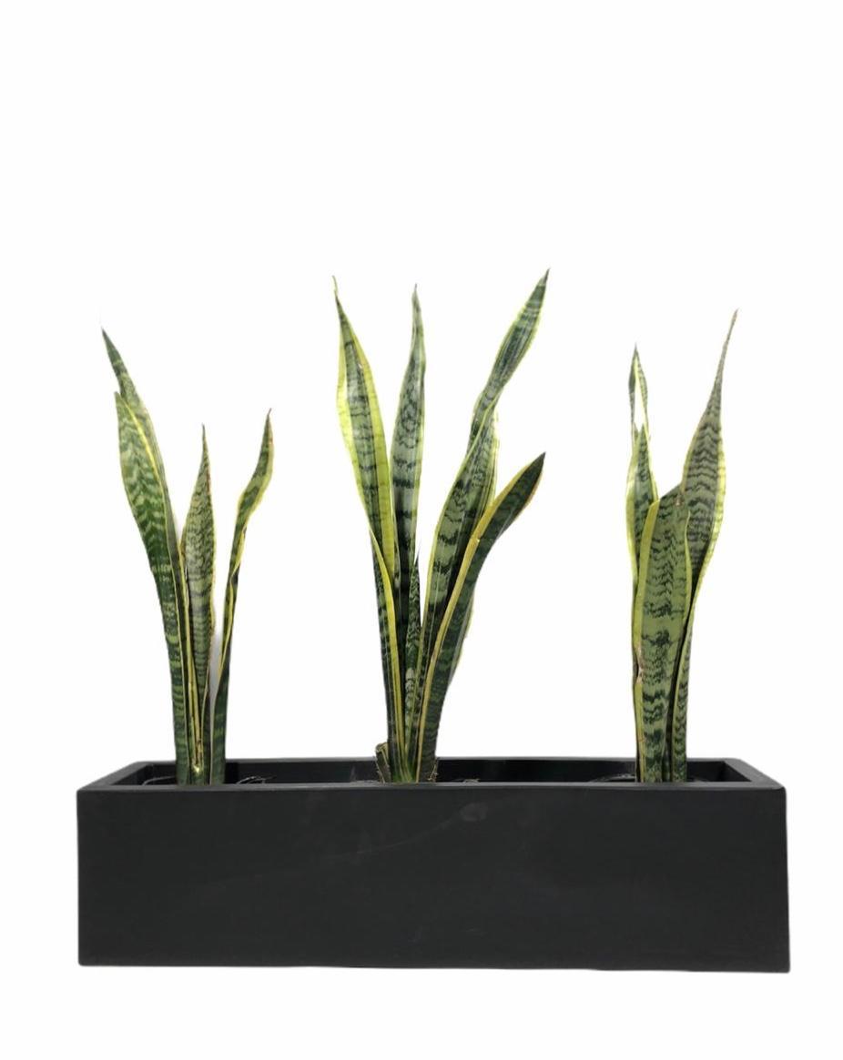 Sansevierias en jardinera rotomoldeada