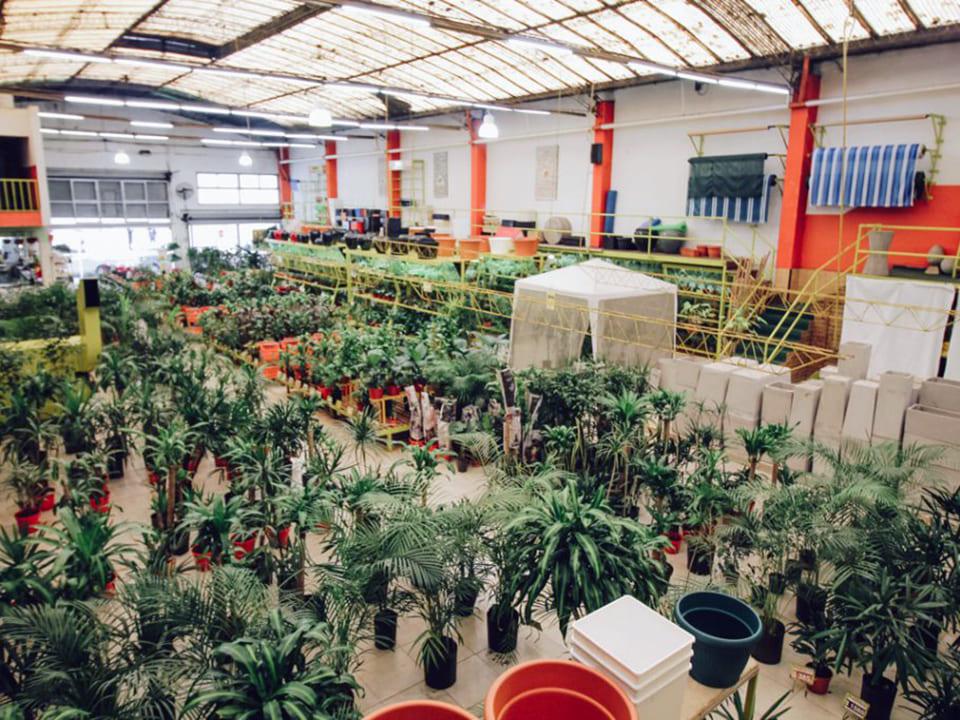 Plantas-Faitful-Empresa-Local1