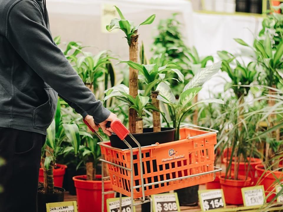 Plantas-Faitful-Empresa-Local2