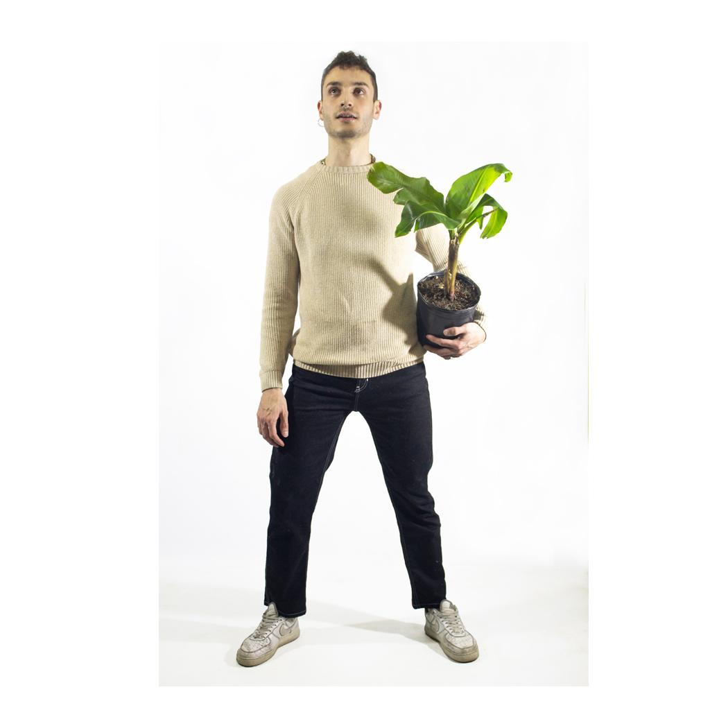 Plantas Faitful Plantas Exterior Bananero E3 Dimension 1 - Plantas Faitful