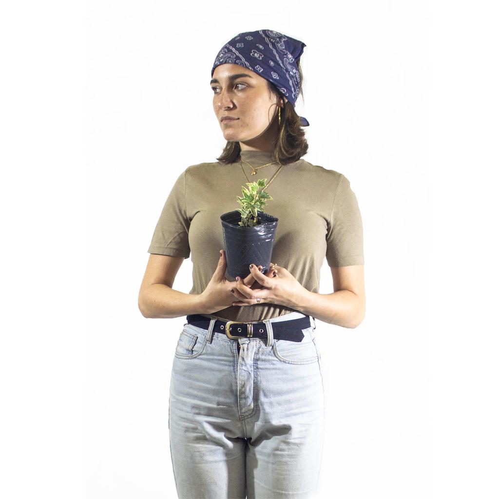 Plantas Faitful Plantas Exterior Hiedra M12 Dimension - Plantas Faitful