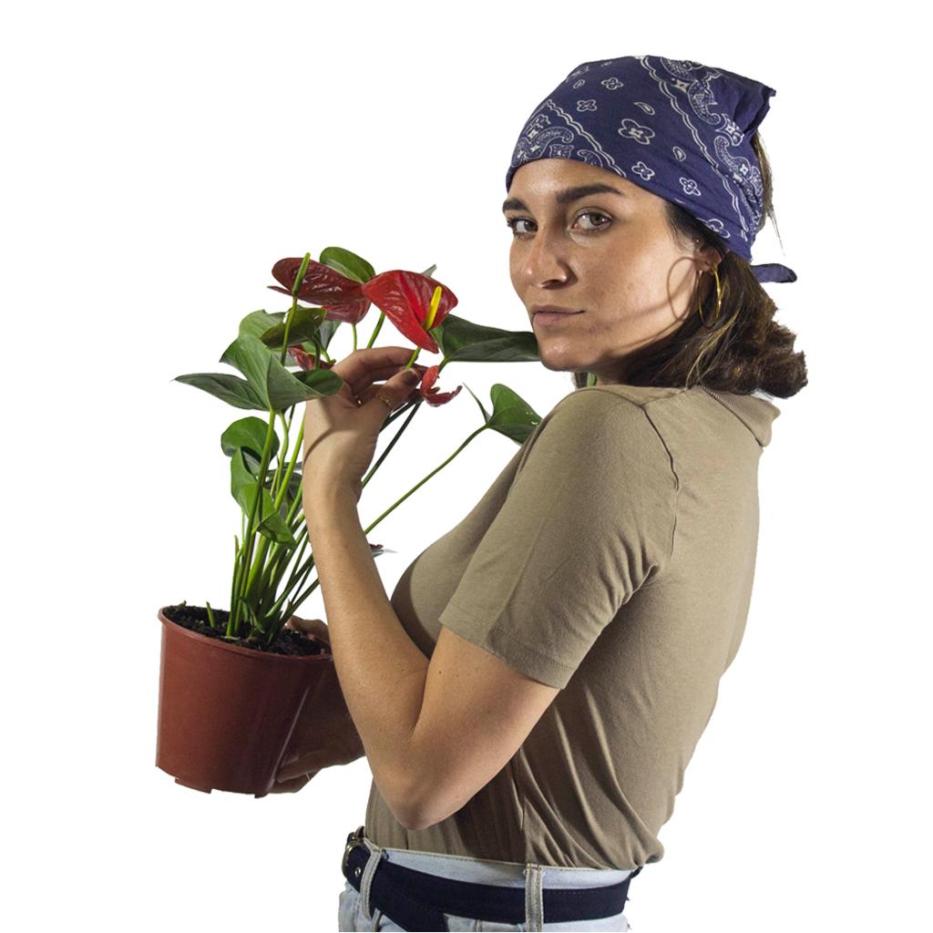 Plantas Faitful Plantas Interior Anthurium M14 Dimension 1 1 - Plantas Faitful