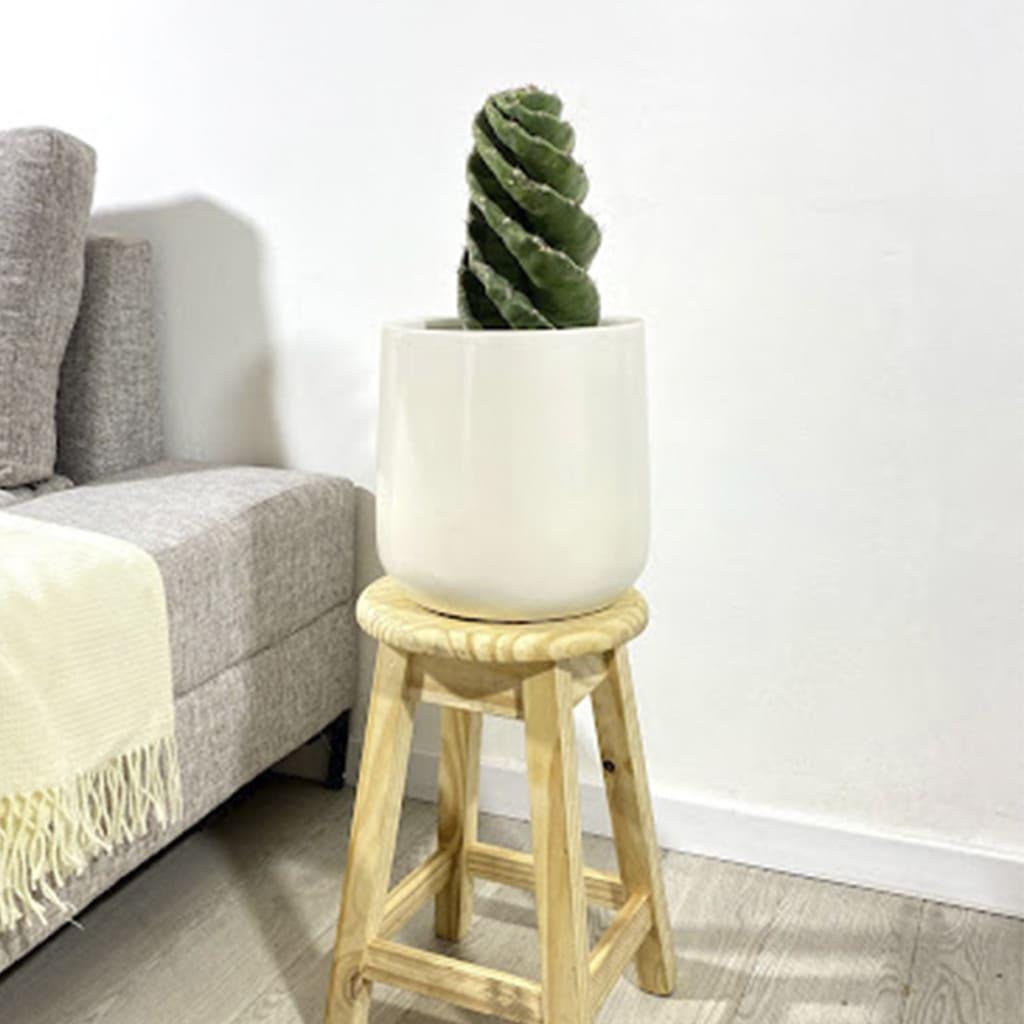 Plantas Faitful Plantas Interior Cactus Espiralado E3 1 1 - Plantas Faitful