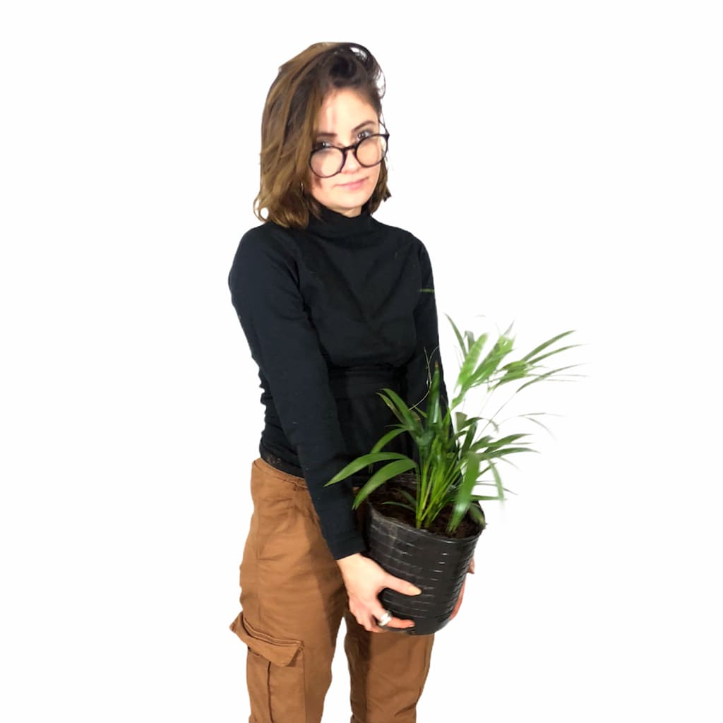 Plantas Faitful Plantas Interior Palmito E3 1 - Plantas Faitful