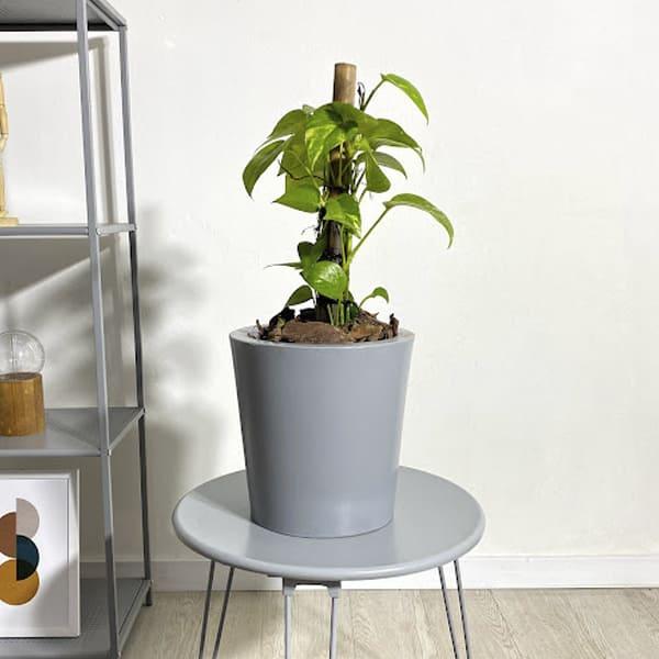 Plantas Faitful Plantas Interior Potus E3 1 - Plantas Faitful