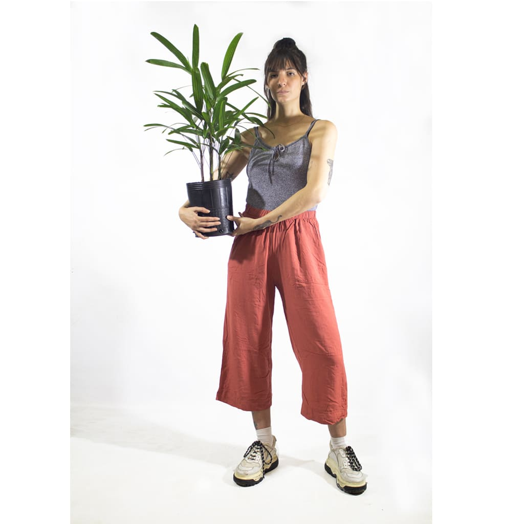 Plantas Faitful Plantas Interior Raphis E3 Dimension 1 1 - Plantas Faitful