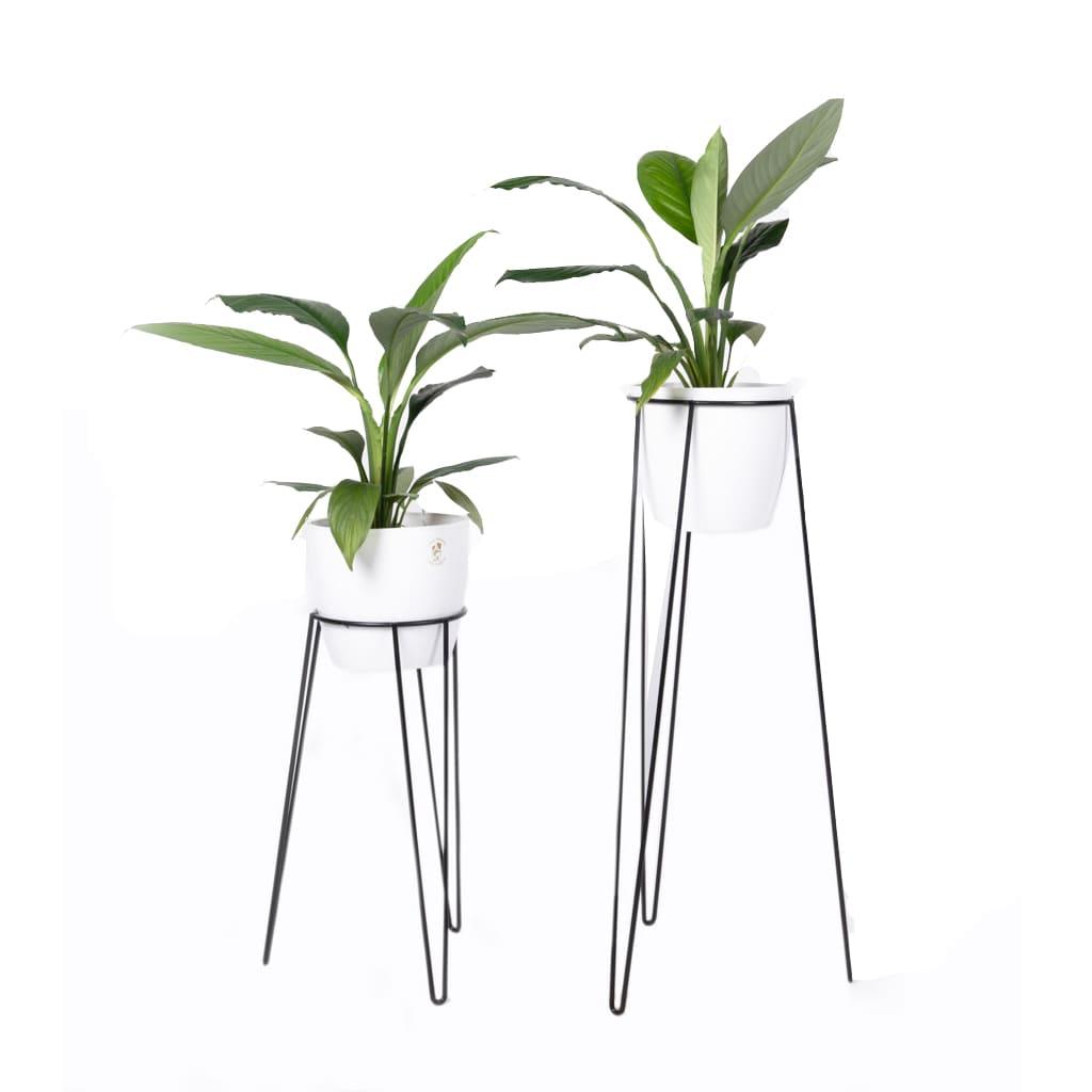 Plantas Faitful Portamacetas tripode hierro 1 - Plantas Faitful
