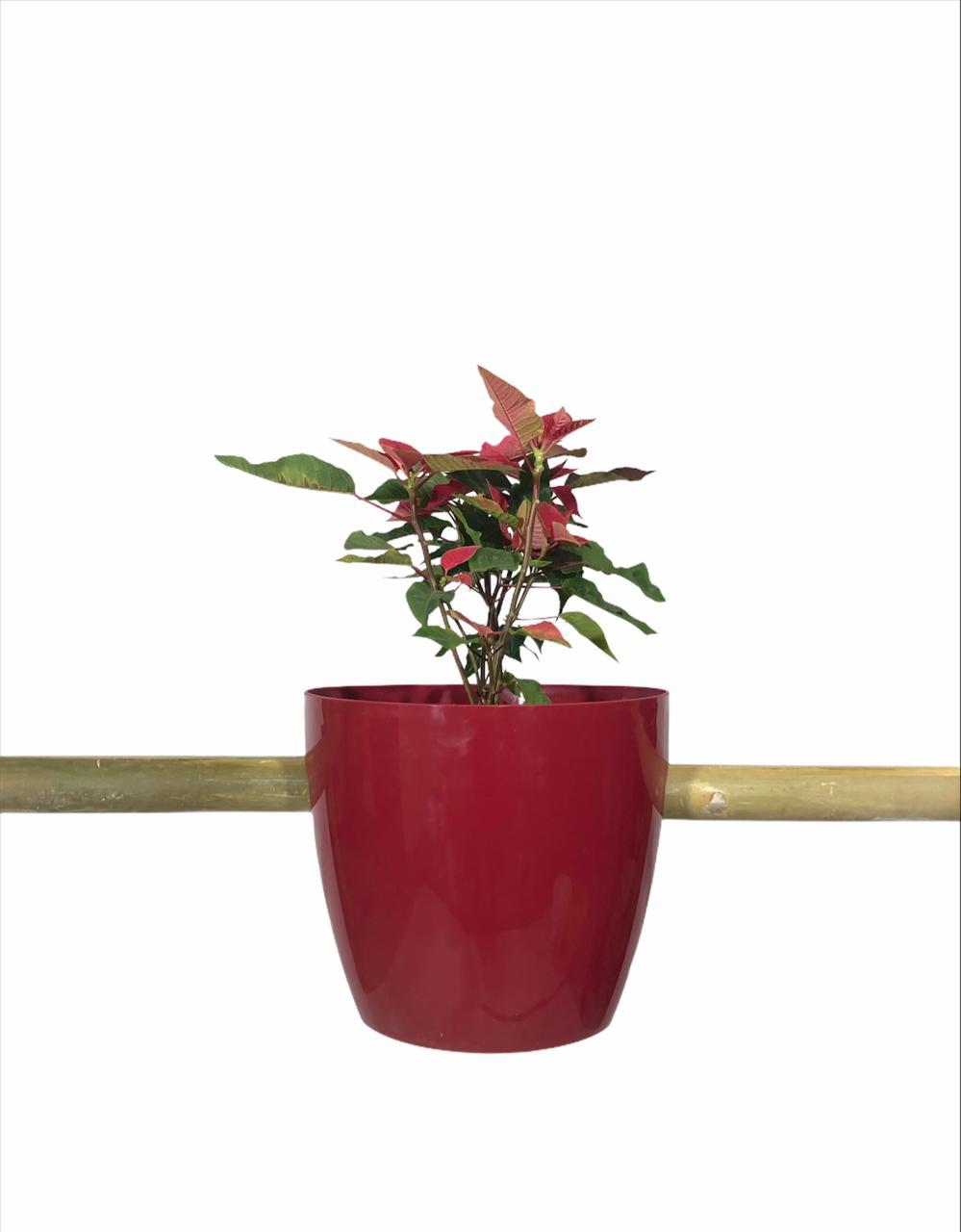 balc3 - Plantas Faitful