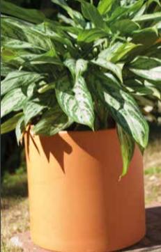 cilindro - Plantas Faitful