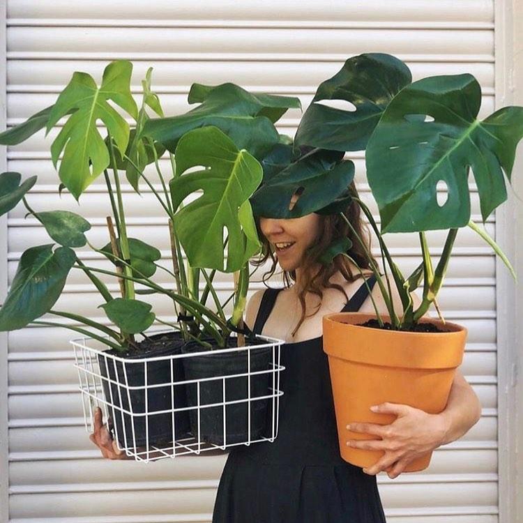 plantasfaitful-blog-monsteradeliciosa-13-11-2020