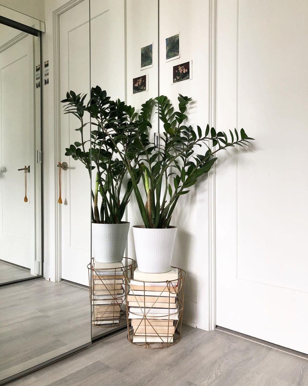 Plantasfaitful-blog-zamioculca-zamiifolia-20-11-2020