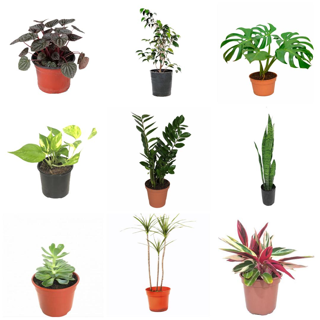 Plantasfaitful-blog-9-plantas-de-interior-resistentes-para-la-decoración-de-tu-casa-20-11-2020