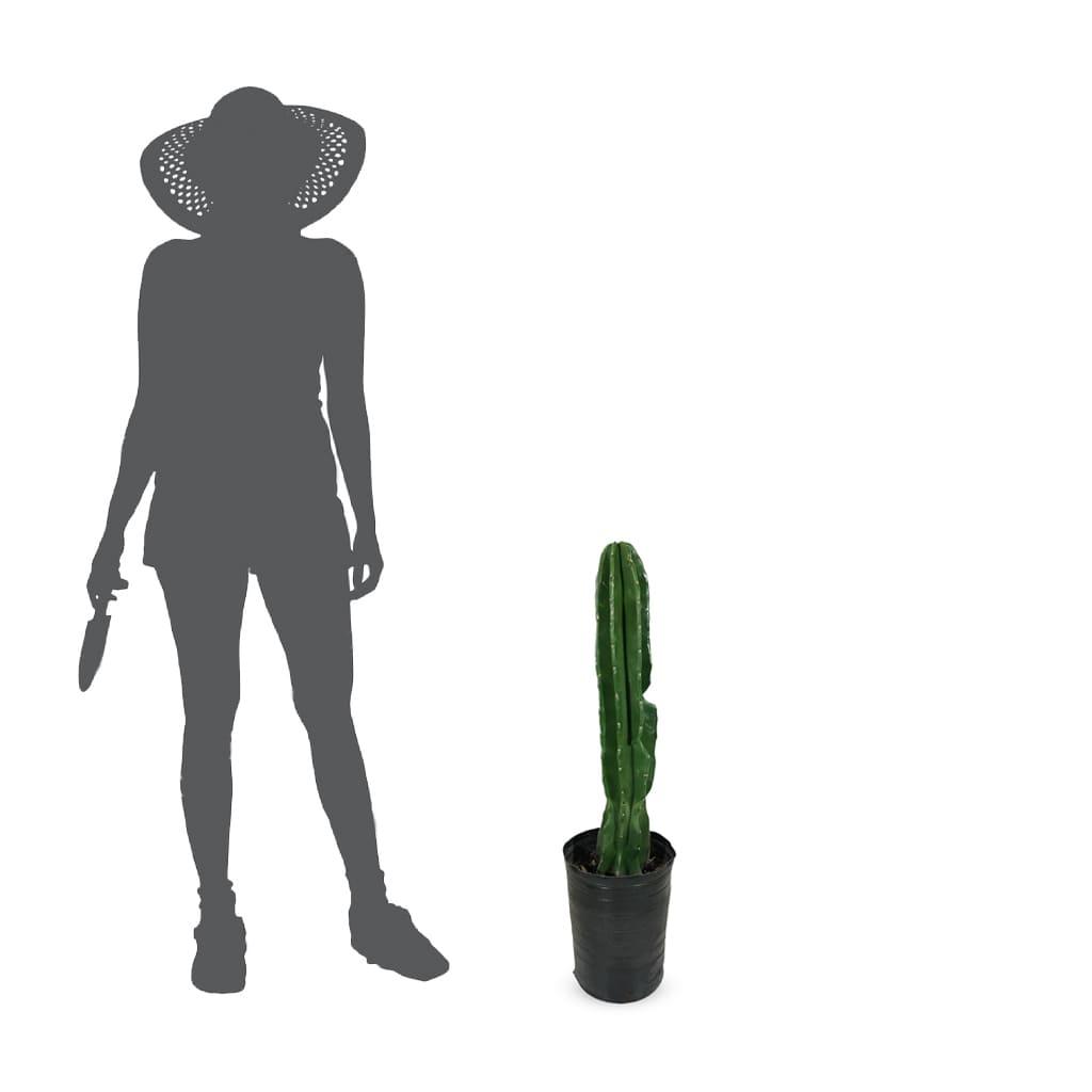 Plantas Faitful Plantas Exterior Cactus Cereus 1 - Plantas Faitful