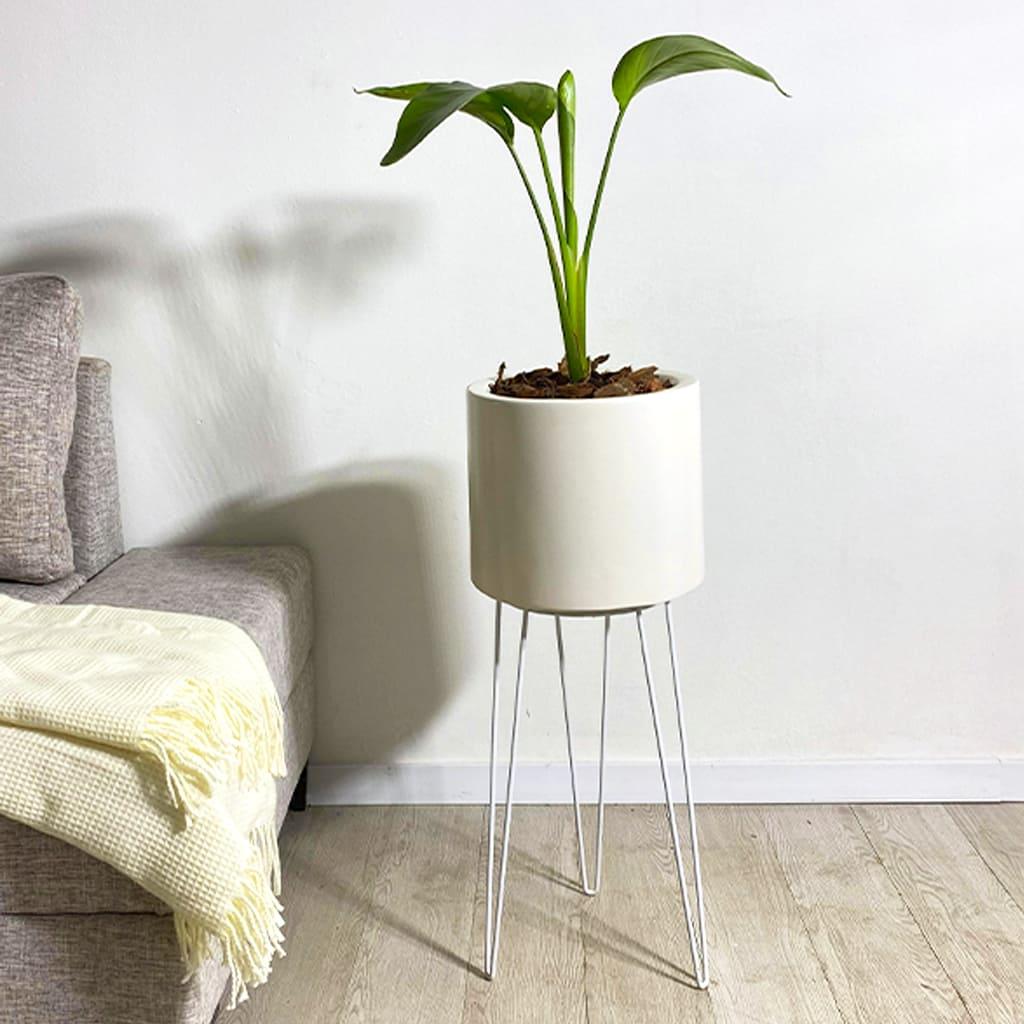 Plantas Faitful Plantas Interior Strelitzia Nicolai E10 1 - Plantas Faitful