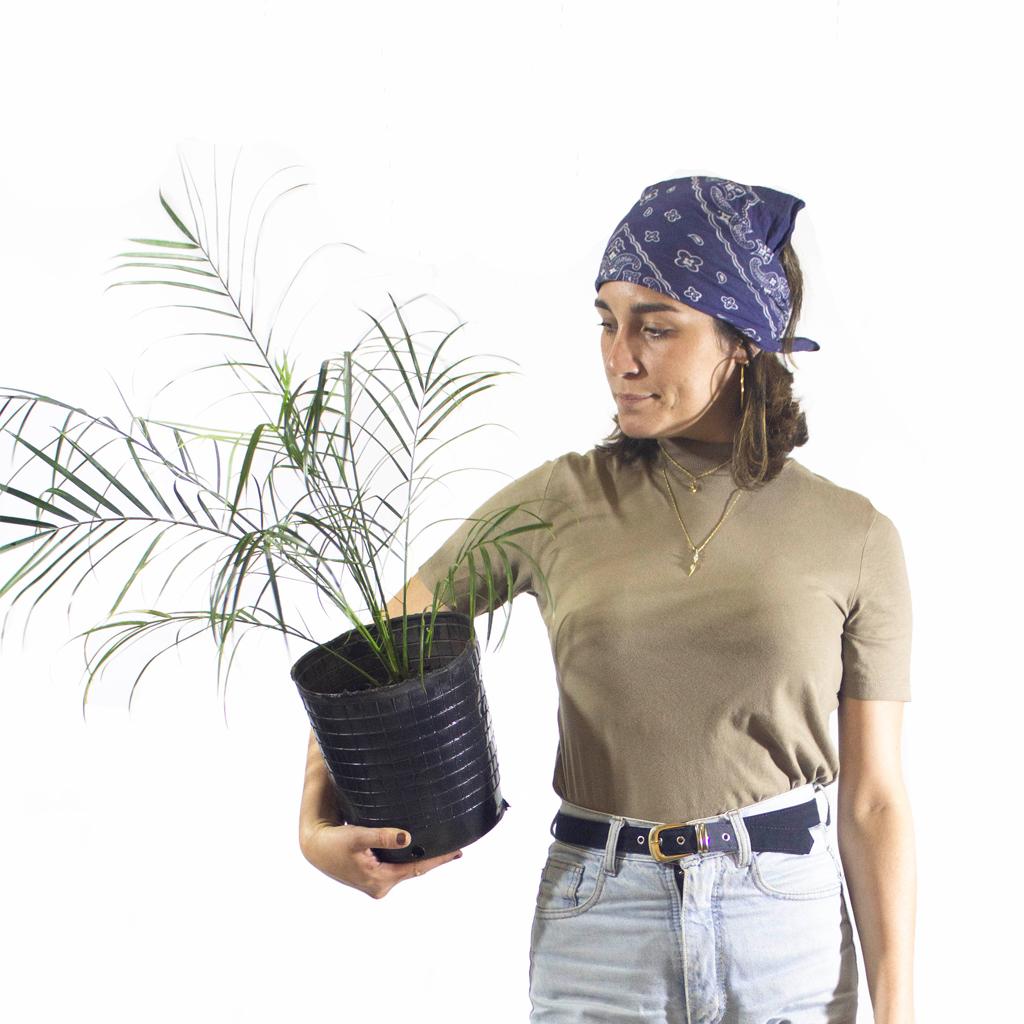 Plantas Faitful Plantas Exterior Phoenix E4 Dimension 1 - Plantas Faitful