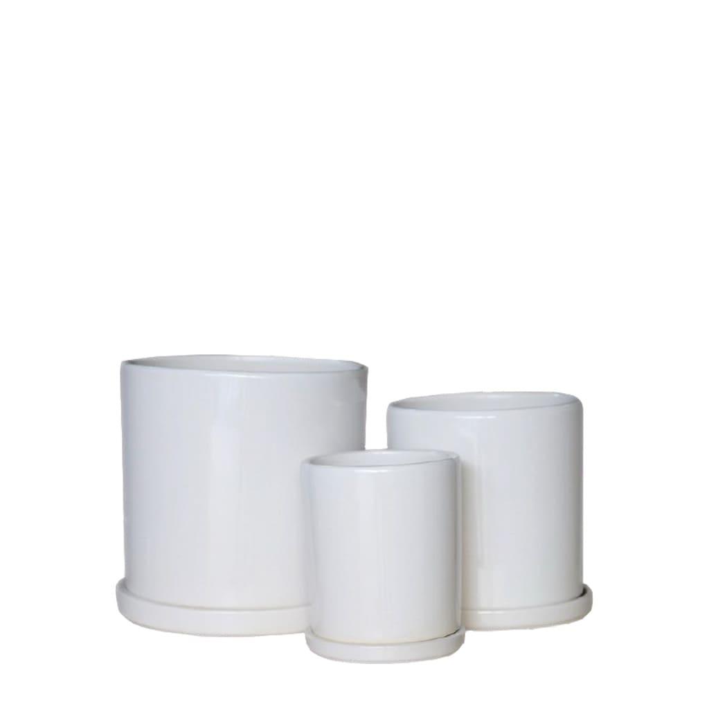 Plantas Faitful Macetas Ceramica Cilindro Blanco - Plantas Faitful