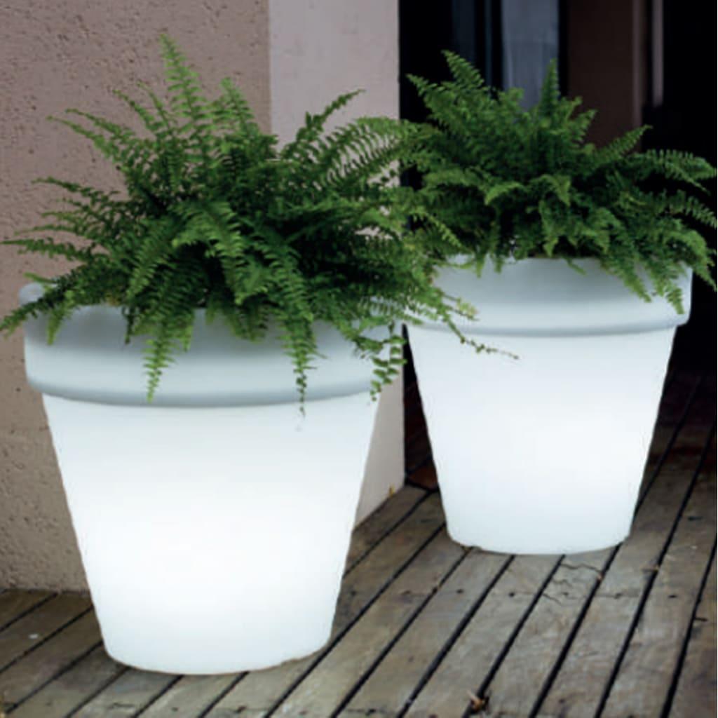 Plantas Faitful Macetas Luminosa Comun N60 2 - Plantas Faitful